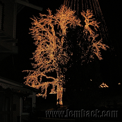 A tree dressed in lights at Liseberg