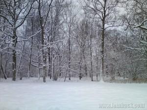 Winter February 2010