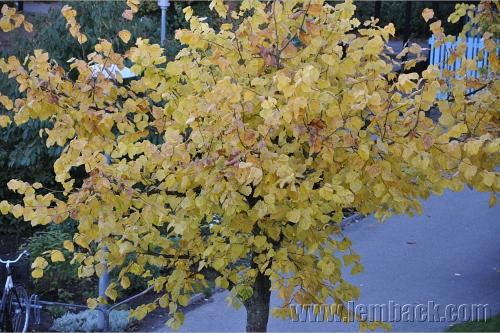 trees in the fall season