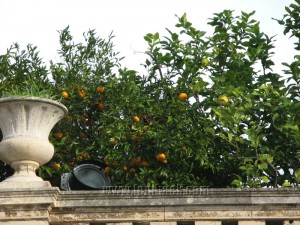 Clementines in Sicily