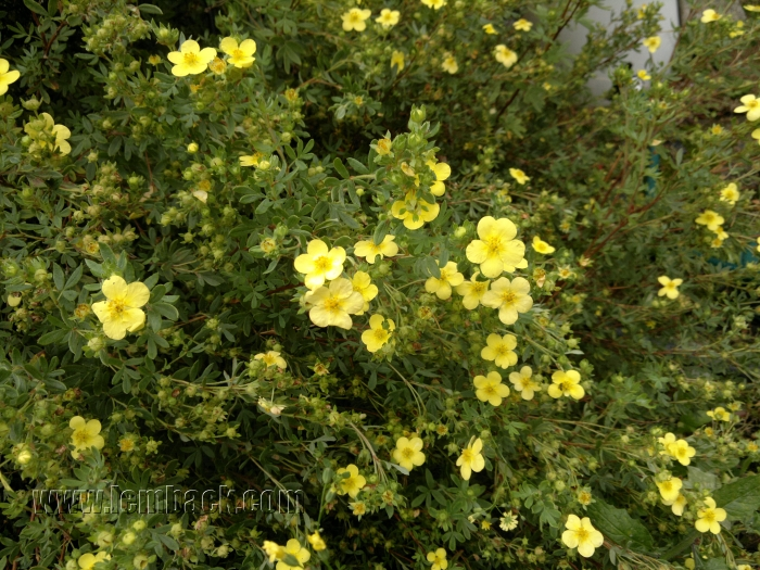 No All-Year Round Bloom