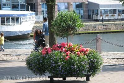 summer city flowers - Helsingborg