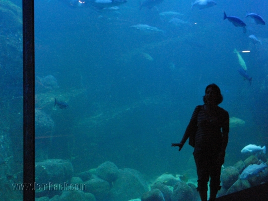 Big aquarium at Universeum