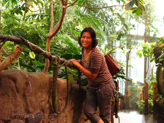 Rainforest at Universeum