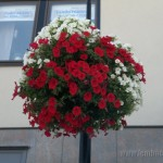 Flowers On Lamp Posts