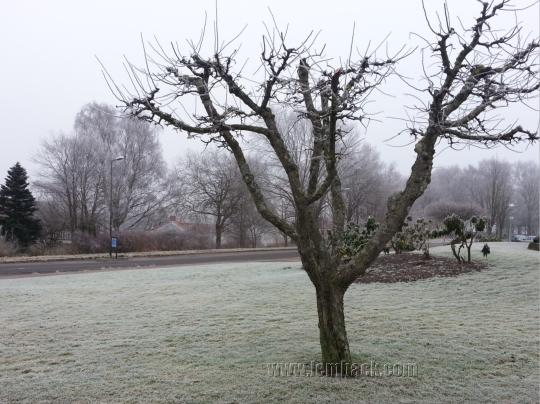winter 020113