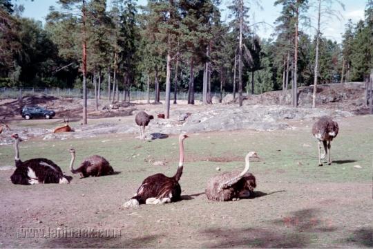 Kolmarden Wildlife Park 3