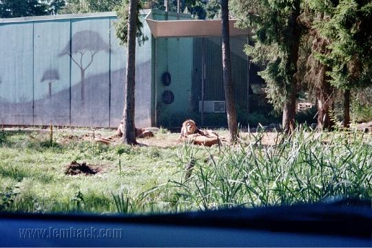Kolmården Lions